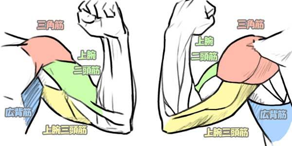 「腕の筋肉」の画像検索結果