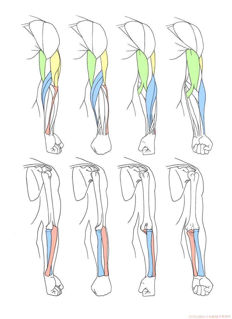 arm_twist_front_L01