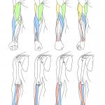 arm_twist_front_R01